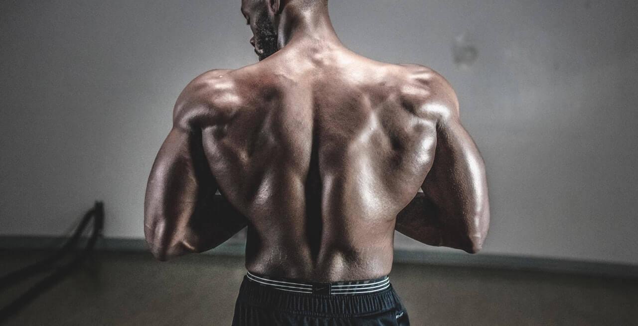 Muskelaufbau Bücher & Bodybuilding Bücher Bestseller im Überblick